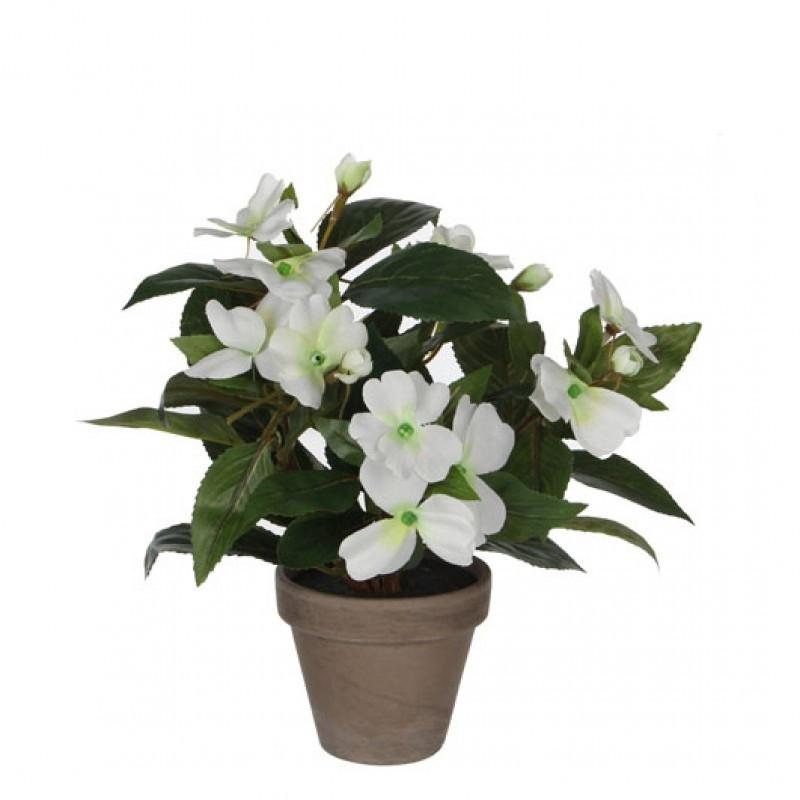 6 Plante Decorative in Ghiveci