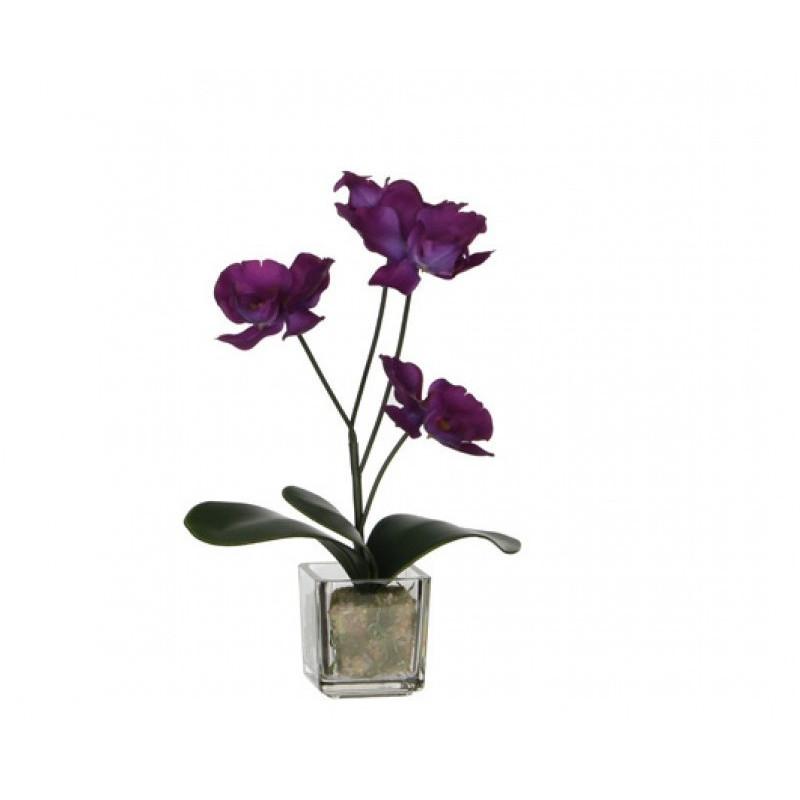 Orhidee in ghiveci de sticla H 25 cm