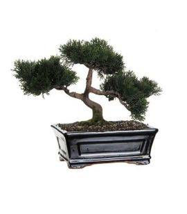 Bonsai Artificial Cedar L26.5xl17xH40 cm