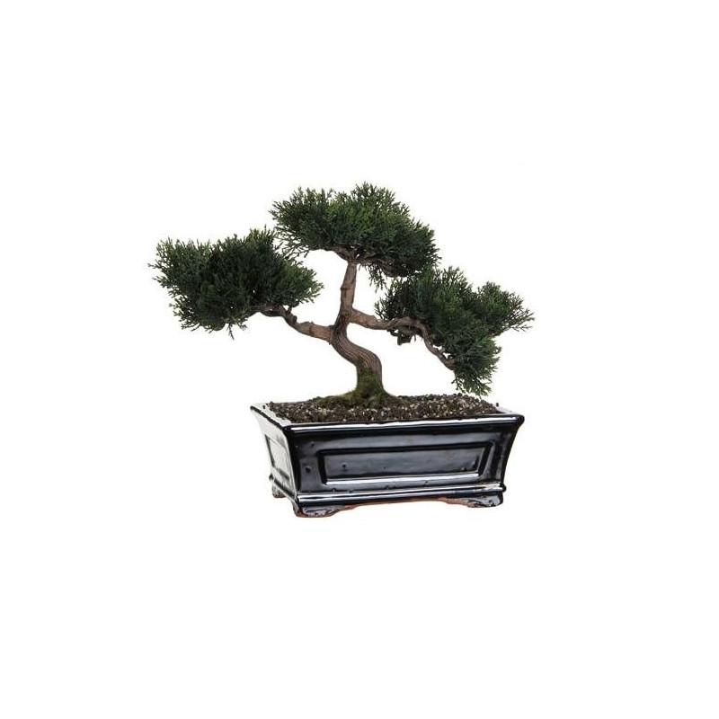 Bonsai Decorativ Cedar