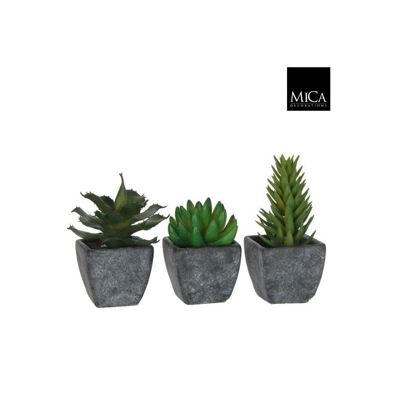 Planta Decorative in Ghiveci Alb
