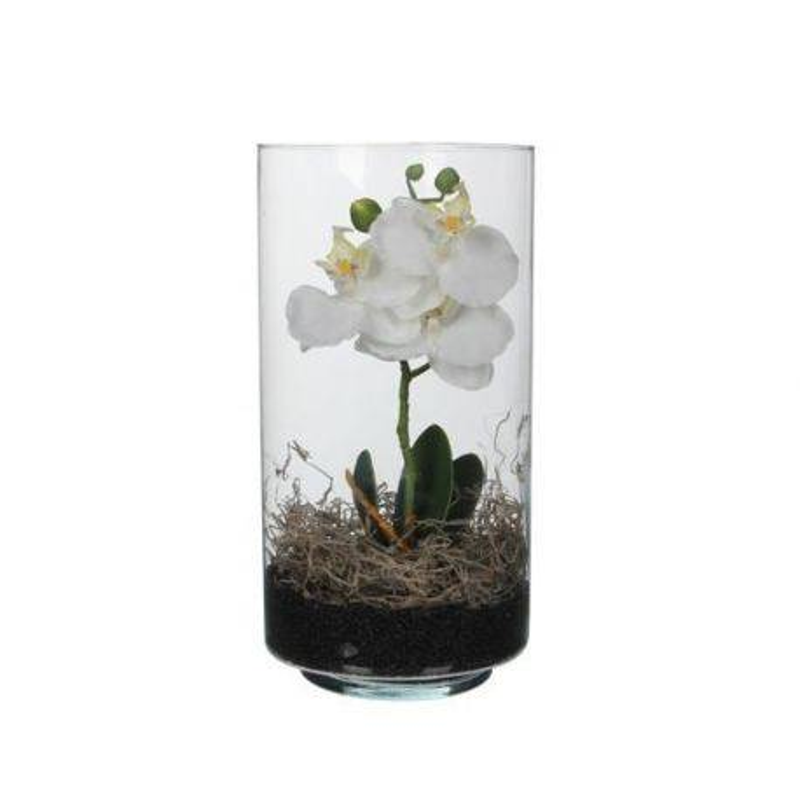 Orhidee Phalaenopsis in vas