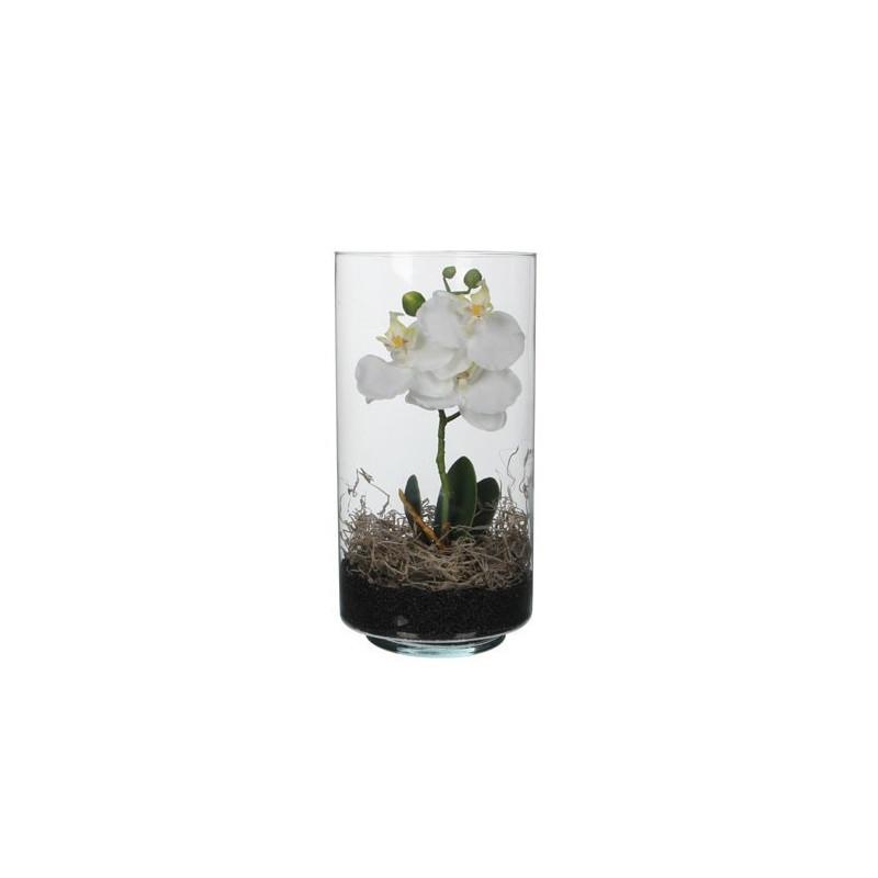 Orhidee Phalaenopsis in Ghiveci